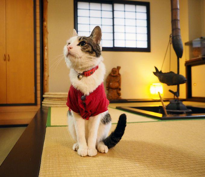 中村屋旅館の看板猫
