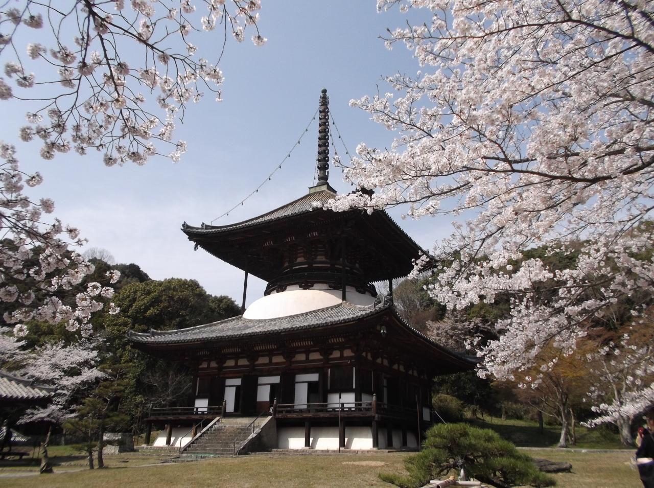 根来寺の桜